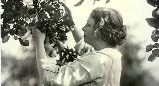 A young adult Helen Keller, touching the leaves of a tree.