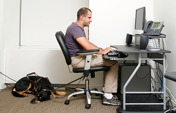 Man using computer with screen reader. His dog guide rests behind his office chair.